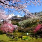 p2_フォトコン春(最明寺史跡公園)