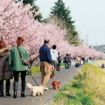 春木径と幸せ道(組写真・左)